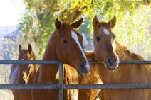 Pobyt na ranči neďaleko Levíc