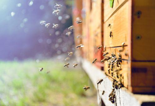 Pobyt vo včelíne